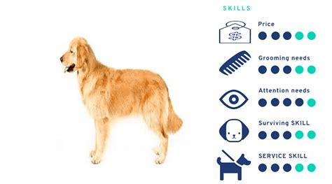 Dog breeds price in India (2020)-Budget friendly breed